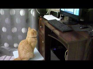 Кот смотрит свой любимый мультик.