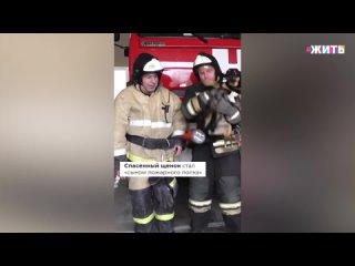 В Зеленоградске щенок не смог расстаться с пожарными, спасшими его из огня