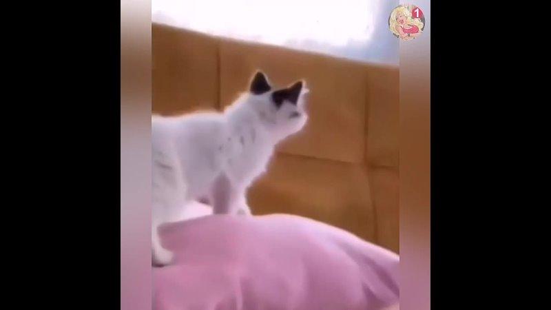 Котенок по имени гав
