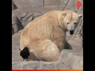 Медвежонок защищает маму / #РЕНТВ