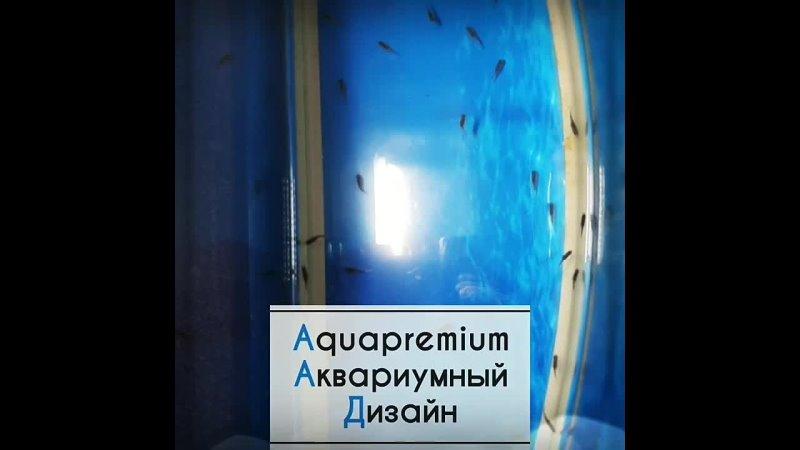 Aquapremium Мальки василька mp4