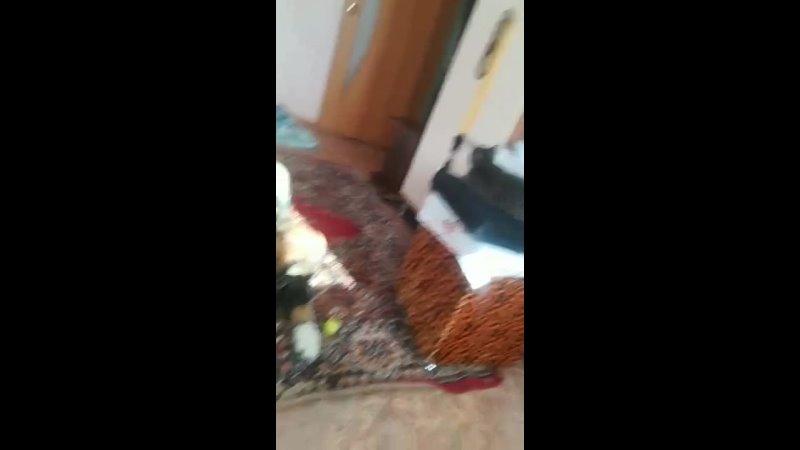 Хуго лопает огурец
