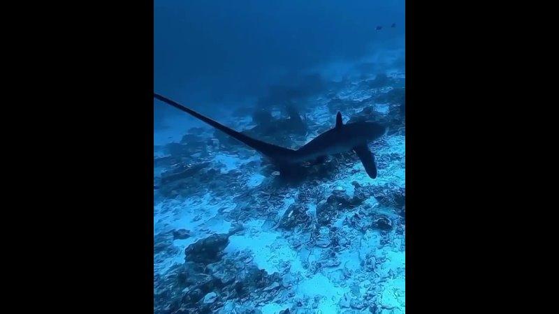купание с акулами