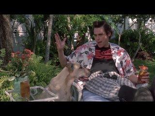 Эйс Вентура. Розыск домашних животных / Ace Ventura: Pet Detective.