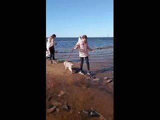 с Тэри на Финском заливе впервые