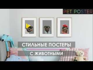 Постеры с животными PetPoster