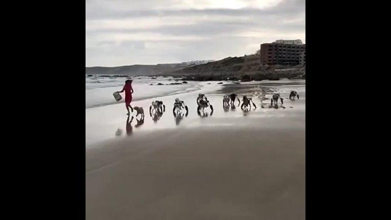 Собаки инвалиды радуются жизни