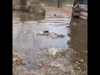 У жителя Башкирии во время паводка погибли бараны