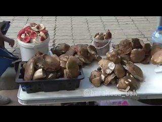 Видеорепортаж об очень инициативном Председателе исполнительного комитета Виталие Наливкине, взявшем под контроль сбор грибов и