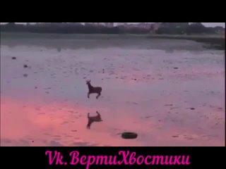 Веселый олень скачет по заливу) Ничего необычного