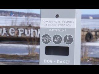 Правила выгула домашних животных 2021 Карелия Петрозаводск новости