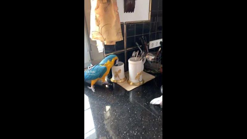 Попугай хулиганит