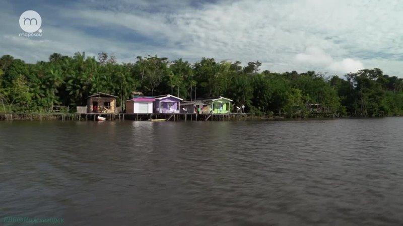 Дельты великих рек Амазонка Целительная сила тропиков Познавательный природа путешествие 2018