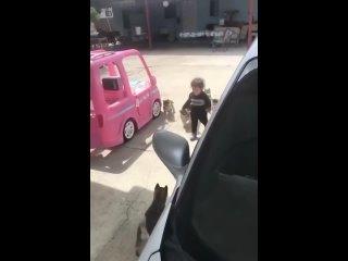 Жесткое нападение собак на ребенка (18+)