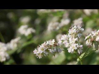 Video by Путь к здоровью и красоте