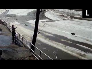 Спасение собаки на льдине