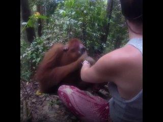 Не шутите с природой когда идешь просто посмотреть на животных. Так как у природы могут быть другие планы!
