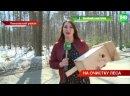 В Татарстане началась акция «Чистые леса» - лесники очищают зеленые массивы в пригороде Казани _ ТНВ
