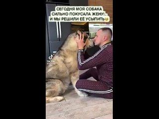 собака сильно покусала жену! и мы решили её усыпить. (это НЕ грустное видео) Видео прикол..mp4
