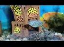Video_20210405_215619.mp4