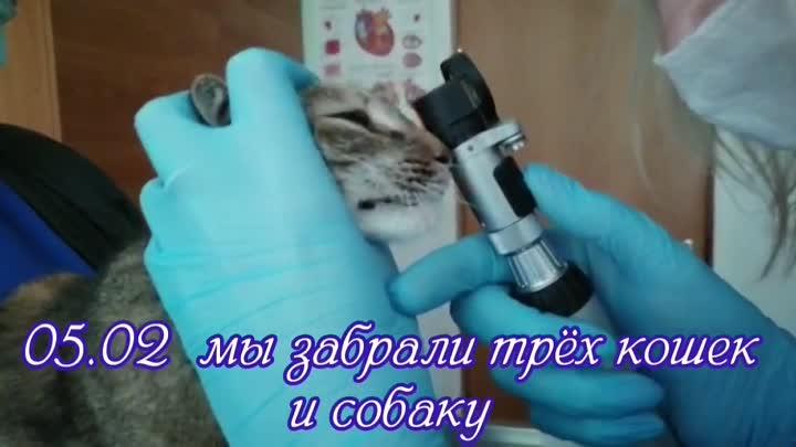 InShot_20210211_154534698.mp4