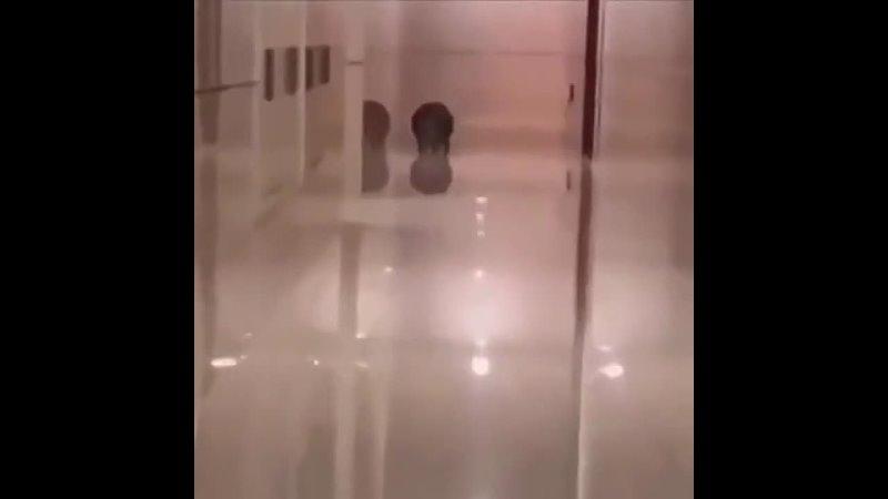 жирный кот нелепо бежит под смешную музыку из губки боба квадратные штаны