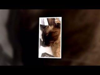 Как развлечь своего кота. Специальные игры для планшетов под Android