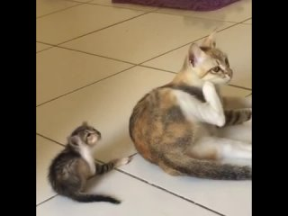 Все у мамы учится)
