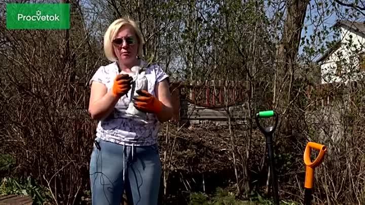 Как посадить РОЗУ весной Учимся сажать розы по всем правилам