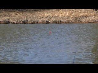О ТАКОЙ РЫБАЛКЕ ТОЛЬКО МЕЧТАТЬ. Очень много рыбы. КАРАСЬ клюёт на поплавочную удочку.