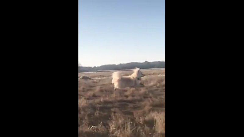 Is that a gazelle