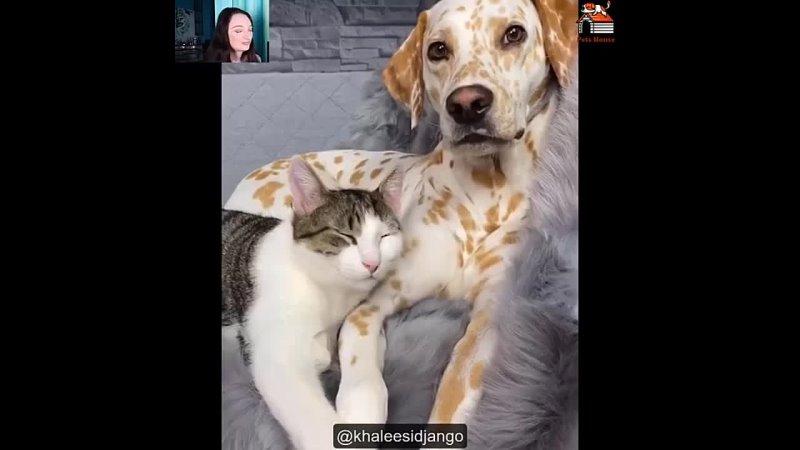 любовь между этим котейкой и собакеном бесценна