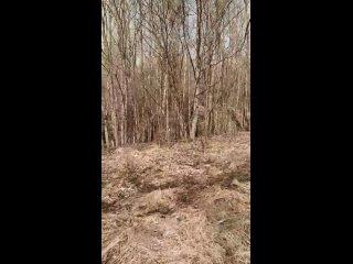 Прогулка с Десси в лесу