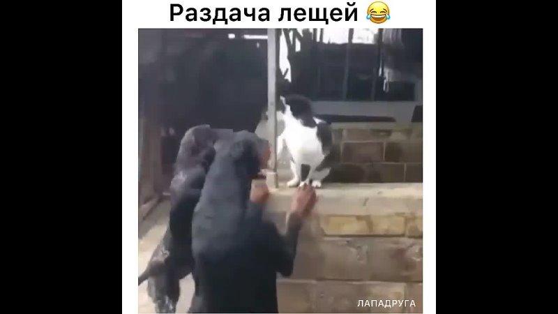 Кот видимо главарь банды 😁