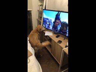 Эти современные собаки, уставятся в свои телевизоры...