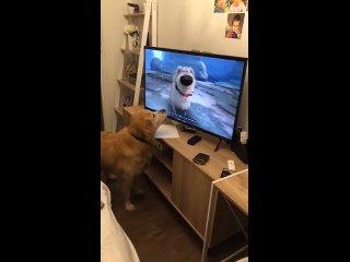 Эти современные собаки, уставятся в свои телевизоры