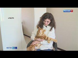 """В Омске появился кот, который точно предсказывает исход матчей """"Авангарда"""""""