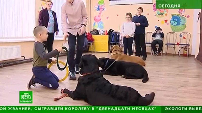 2021 03 29 Как петербургские собаки лечат детей именяют их жизнь