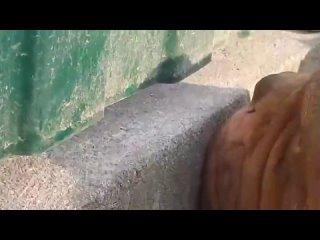Псы залипли в щель