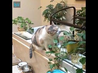 Мы запретили ей есть растения, и теперь она дразнит нас, притворяясь, что жу т их (720p).mp4