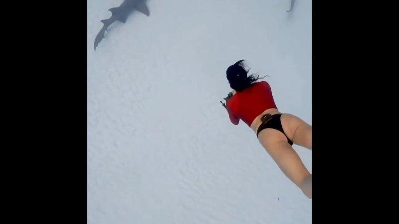 Акулы Багамских островов 🦈