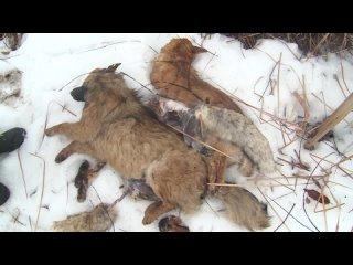 В одном из казанских поселков обнаружили трупы животных с содранной кожей