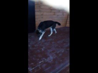 Потерялся пес!