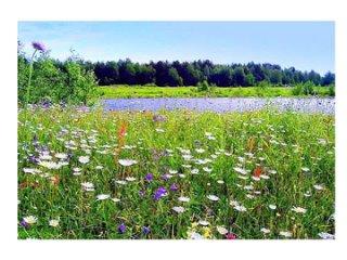 АУДИОКНИГА  Читает Горшкова ЗЕЛЕНЫЕ ЦВЕТЫ из книги Николая Рубцова Зеленые цветы (3)