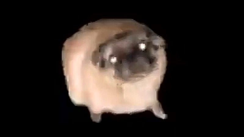 собака отжигает под песню сало mp4