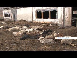 В Ачинском районе на одной из ферм обнаружили десятки трупов животных.