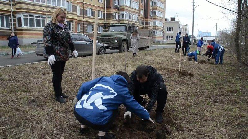 В Йошкар Оле на улице строителей вдоль домов 75 и 77 высаживают деревья