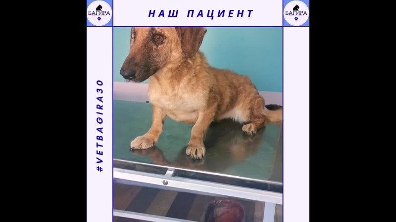 Демодекоз Результат лечения Ветеринарная клиника Багира г Астрахань