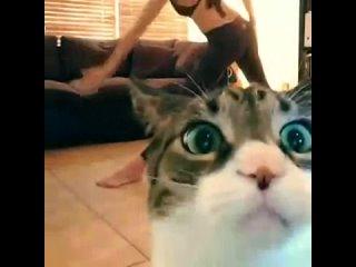 Котик нашёл скрытую камеру