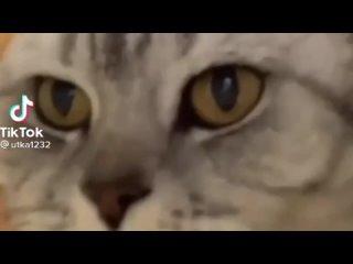 Кот дико зафлексил под Биггас